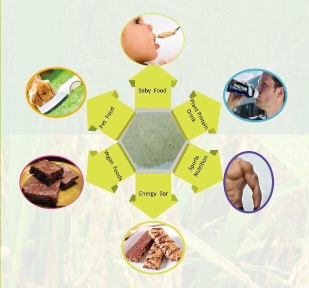 PLANT PROTEIN APPLICATION